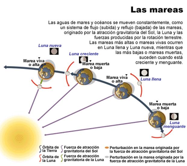 las-mareas-el-surf-4